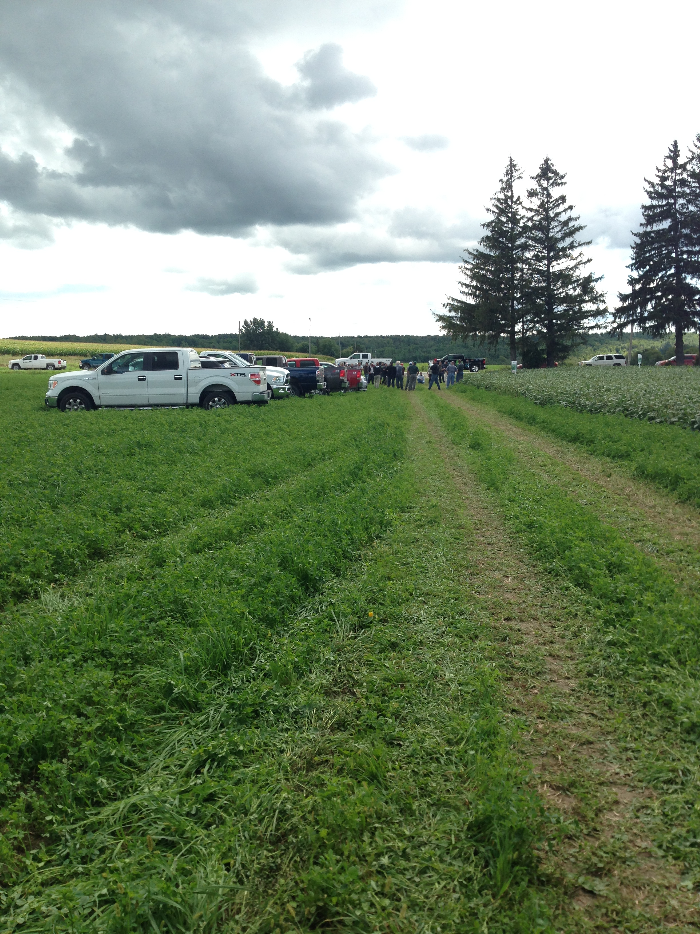 Crowd gathered at Woof's farm