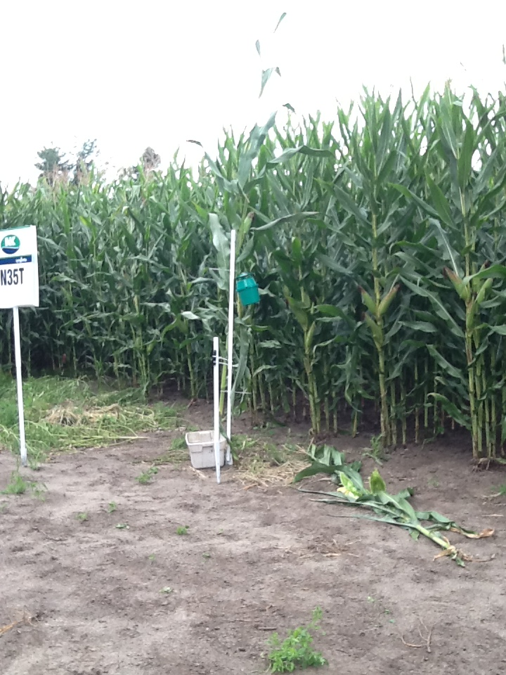 Weather station and Western Bean Cut Worm Trap at Hakkesteegt's