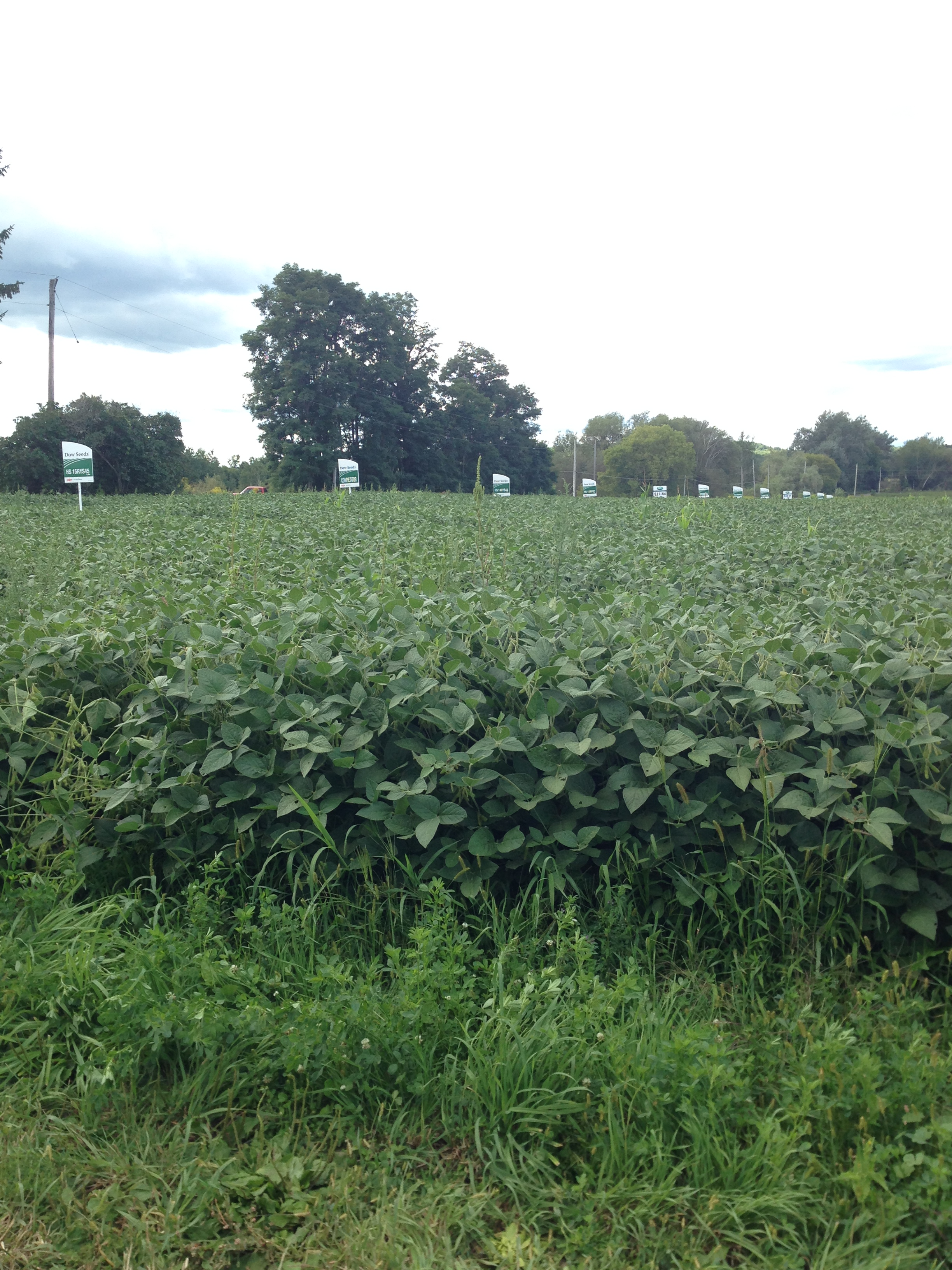 Dow Signs in Soybean field at Woof's Farm